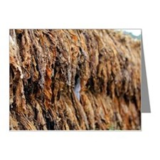 Tobacco Note Cards (Pk of 10)