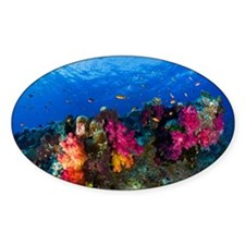 Soft corals on shallow reef, Fiji Decal