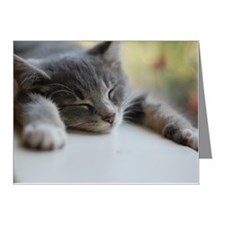 Napping gray tabby kitten Note Cards (Pk of 20)