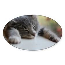 Napping gray tabby kitten Decal