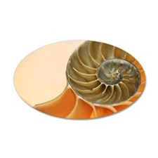 Cross section of a nautilus  Wall Decal