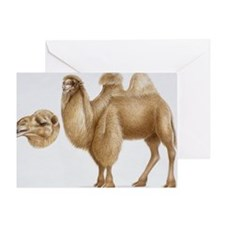 Illustration of Bactrian Camel (Came Greeting Card