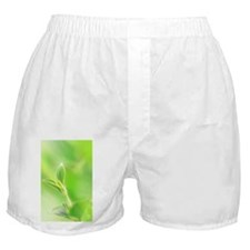 Young leaf Boxer Shorts