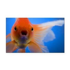 Close-up of a goldfish Rectangle Car Magnet