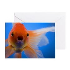 Close-up of a goldfish Greeting Card