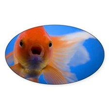 Close-up of a goldfish Decal