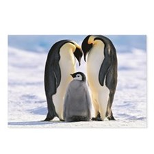 Emperor Penguin Aptenodyt Postcards (Package of 8)