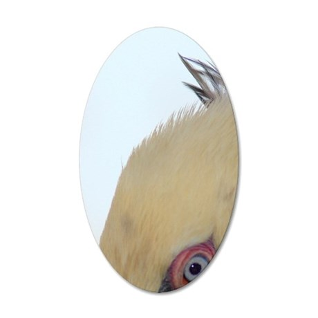 Brown Pelican head ,close up 35x21 Oval Wall Decal