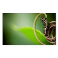Caterpillar on leaf Decal
