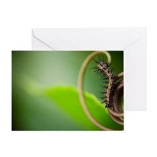 Caterpillar on leaf Greeting Card
