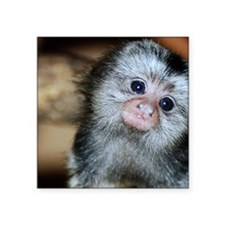 "Marmoset monkey Square Sticker 3"" x 3"""