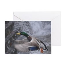Flying duck Greeting Card