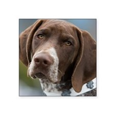 "German Shorthair Pointer Wi Square Sticker 3"" x 3"""