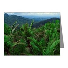 Rainforest Note Cards (Pk of 20)