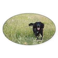 Black Cocker Spaniel Decal