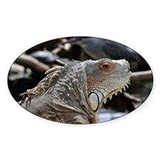 Close-Up Of Face Of Green Iguana Decal