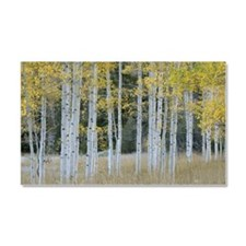 Autumn leaves on trees in fores Car Magnet 20 x 12