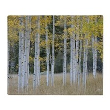 Autumn leaves on trees in forest Throw Blanket