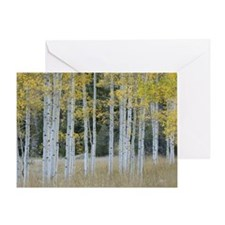 Autumn leaves on trees in forest Greeting Card