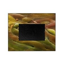 m8500388 Picture Frame