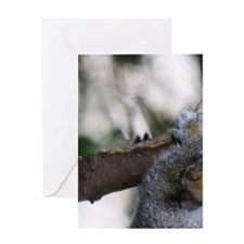 Squirrel and his nuts. Greeting Card