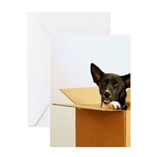 Border collie mix dog in box. Greeting Card