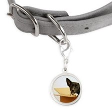 Border collie mix dog in box. Small Round Pet Tag