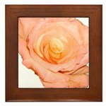 Peach Rose Framed Tile