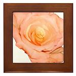 Peach Rose Framed Tile