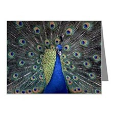 Peacock Note Cards (Pk of 20)