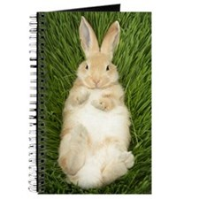 Rabbit laying in grass Journal