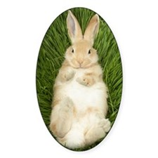 Rabbit laying in grass Decal