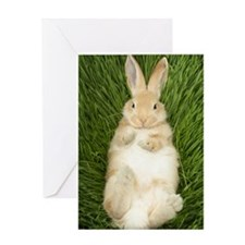 Rabbit laying in grass Greeting Card