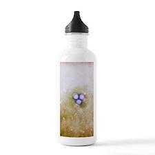 Rift Valley fever viru Water Bottle