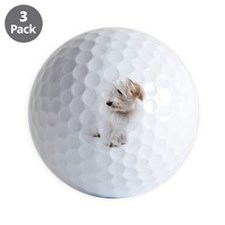 Ada, a 4-month old Havanese puppy poses Golf Ball