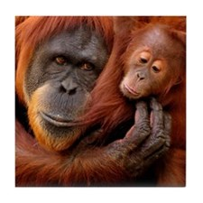 A mother and baby orangutan share a h Tile Coaster