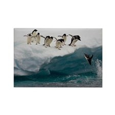 Adelie Penguins diving into the s Rectangle Magnet