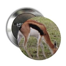 "young thompsons gazelle kenya collect 2.25"" Button"