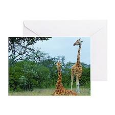 rothschild giraffe pair at soysambu  Greeting Card