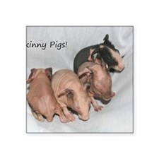 "Skinny pigs Square Sticker 3"" x 3"""