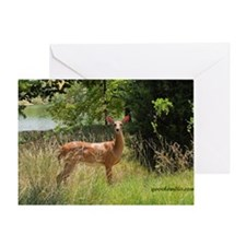 Beautiful doe Greeting Card