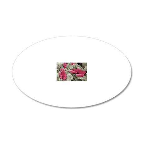 Bird red blood cells, SEM 20x12 Oval Wall Decal