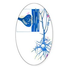 Artwork of a nerve cell of the brai Decal