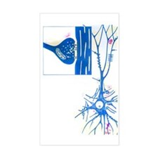 Artwork of a nerve cell of the Decal