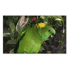 Yellow Nape Amazon Parrot Decal
