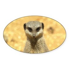 EyePix Meerkat Oval Decal