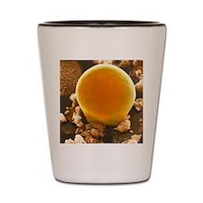 Fat cell, SEM Shot Glass