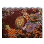Mollusks of the North Pacific 2013 Calendar v1