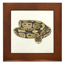 Ball Python Photo Framed Tile