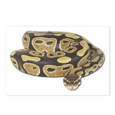 Ball Python Photo Postcards (Package of 8)